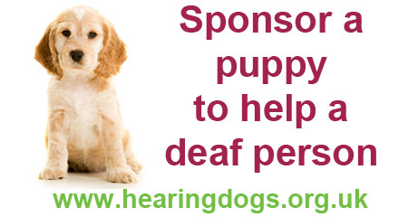 Puppy socialising for Hearing Dogs