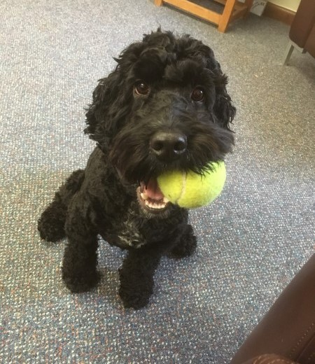 Hearing dog puppy Echo with his favourite toy