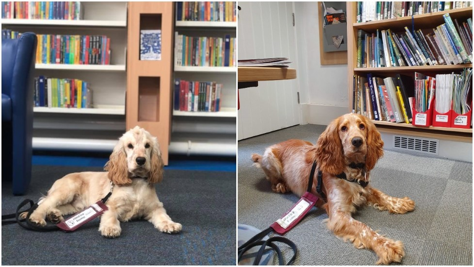 River and Oshi checked into their local libraries