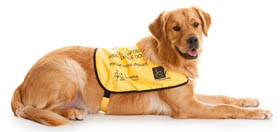 Dual assistance dogs