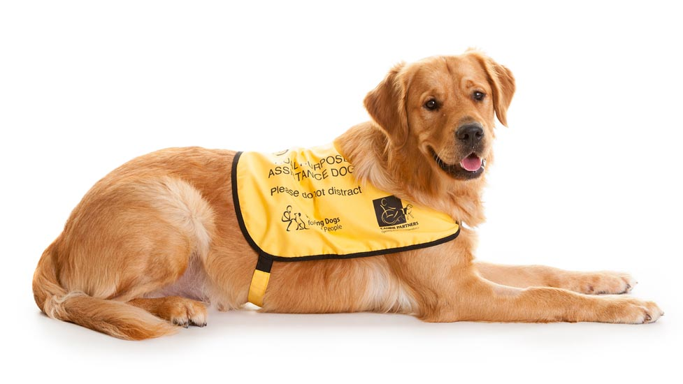 Training Hearing Assistance Dogs