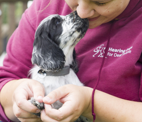 hearing dog puppies