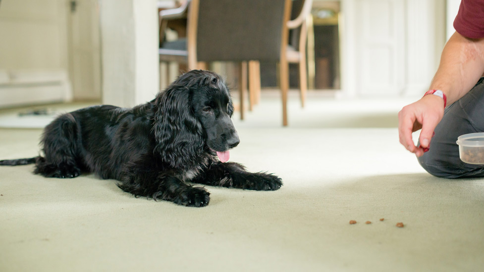 impulse control hearing dog puppy training