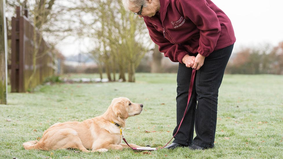 dog training puppy three star hearing dogs holding