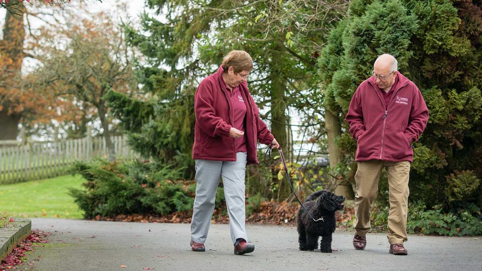 walking behaviour hearing dog puppy training