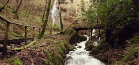 The Great British Dog Walk - Canonteign Falls, Exeter