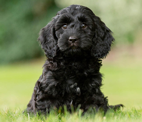 Play the Hearing Dogs Raffle