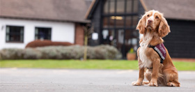 take a tour of hearing dogs training grounds