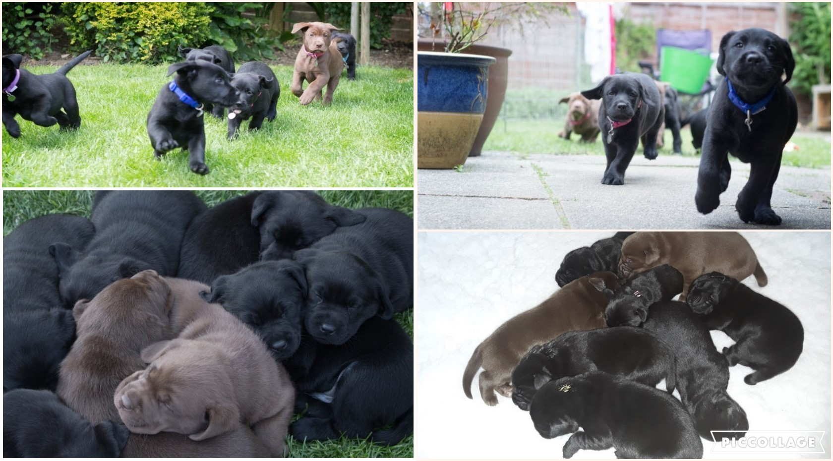 E litter collage.jpg