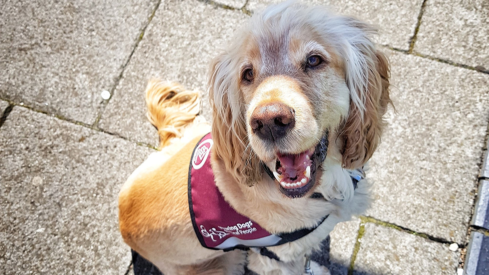 Hearing dog Albert in his burgundy jacket