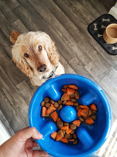 Dinner time for hearing dog Albert