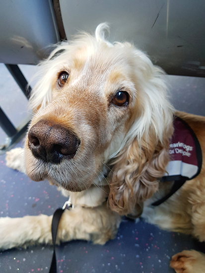 Hearing dog Albert settles on the bus