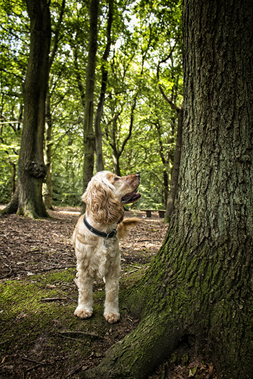 Hearing dog Albert spots a squirrel
