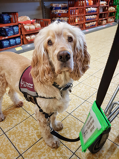 Hearing dog Albert at the supermarket