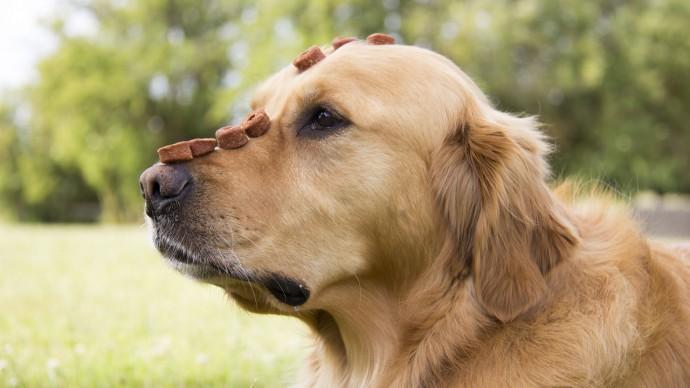 Watch hearing dog Rory's impressive impulse control trick!