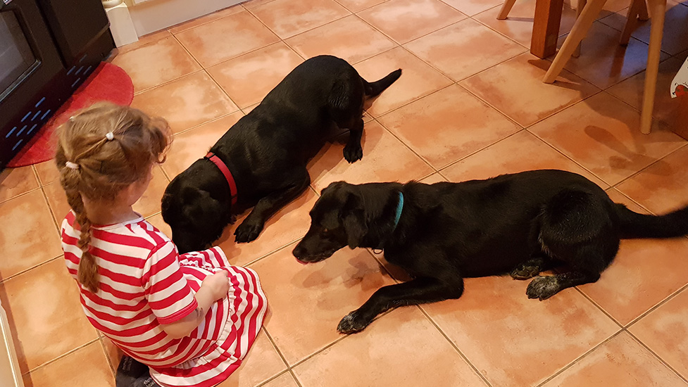 Black Labs are great with children