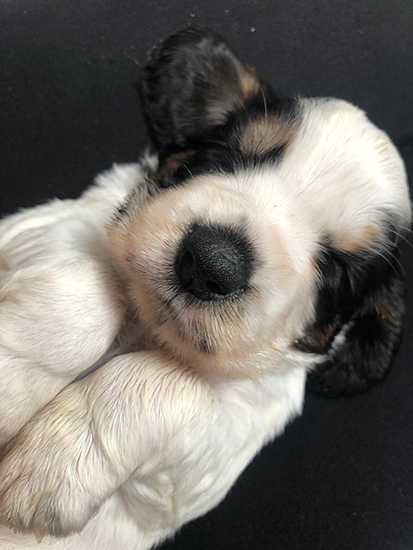 A puppy close-up