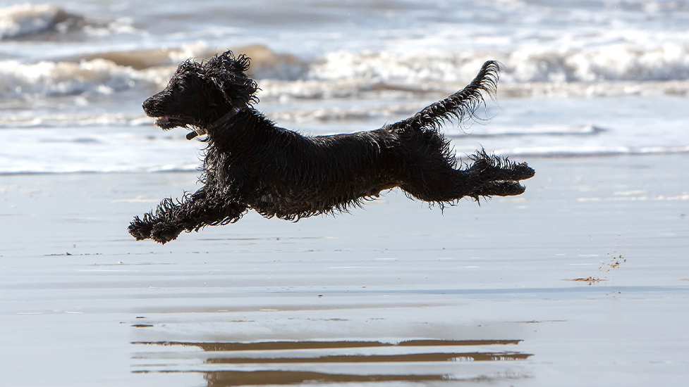 Hearing dog mum Charley having a great time at the beach