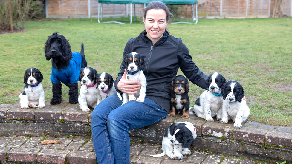 Volunteer Nicki with hearing dog mum Charley and eight cocker spaniel puppies