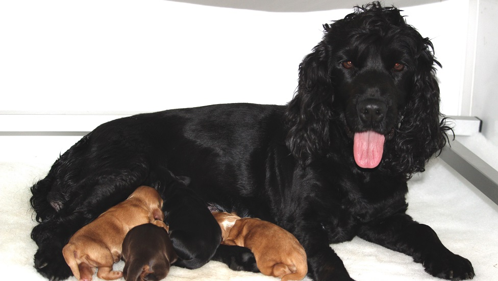 Lyla with her litter