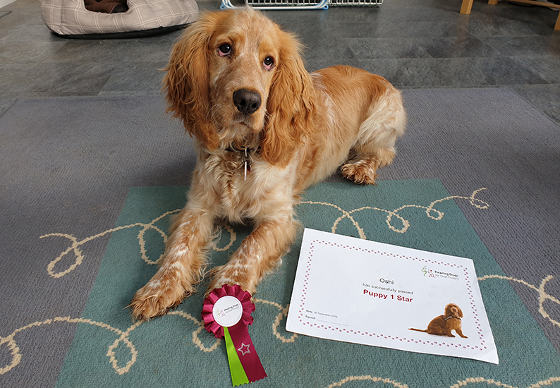 Hearing dog puppy Oshi with his puppy one star award