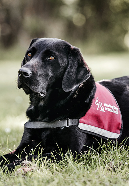 Hearing dog Kallie