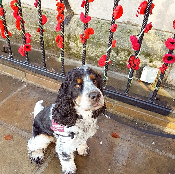 Jovi with poppies