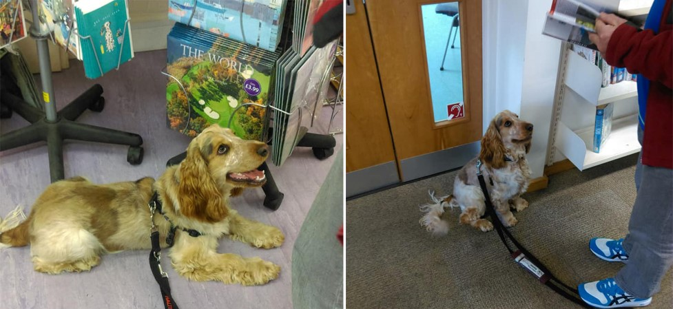 Benji did a great job settling in a shop and the library