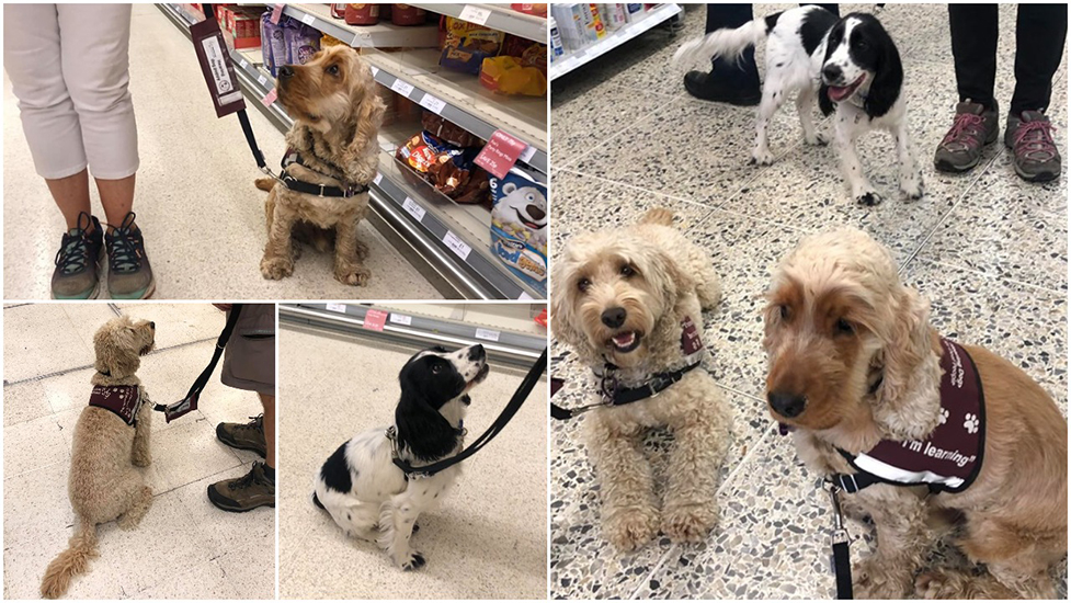 Supermarket training for hearing dog puppies