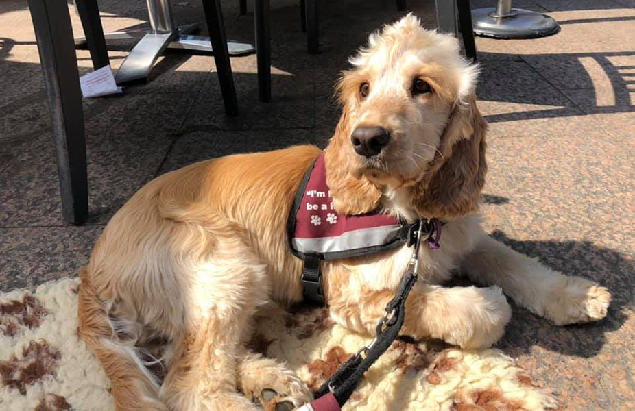 River passed the third stage of his hearing dog training