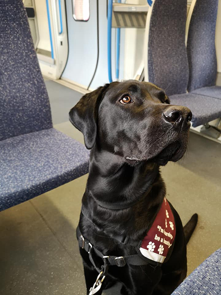 Rex experienced the train for the first time