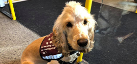 Hearing dog in training River on public transport