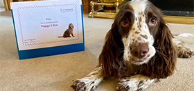 Cocker spaniel Riley with her hearing dog certificate