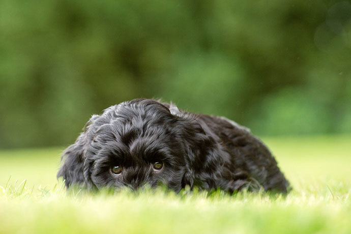 cute hearing dog hide and seek
