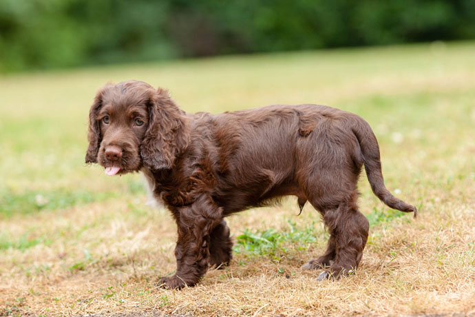 hearing dogs puppy cute