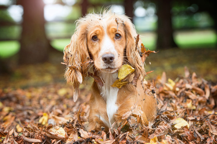 hearing dogs cute leaves