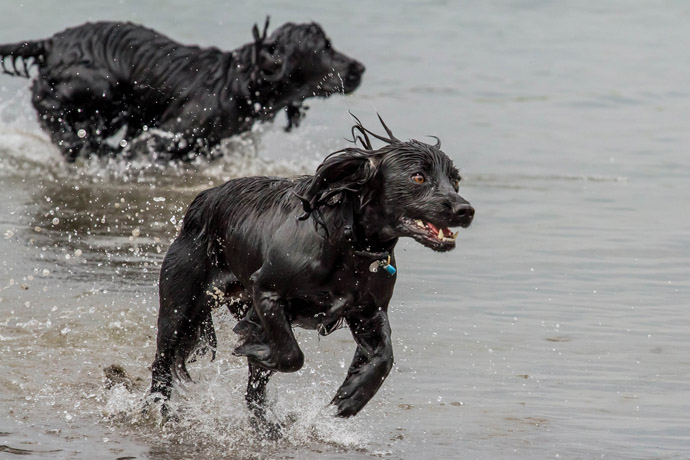 Dogs swimming beach