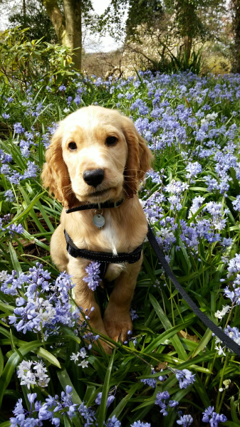 Hearing Dog Puppies Who Love Spring Flowers