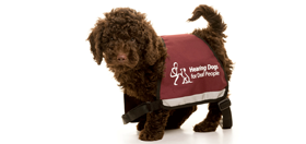 Facebook hearing dogs