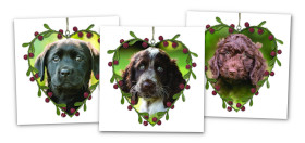 three christmas cards with sponsor hearing dogs puppies
