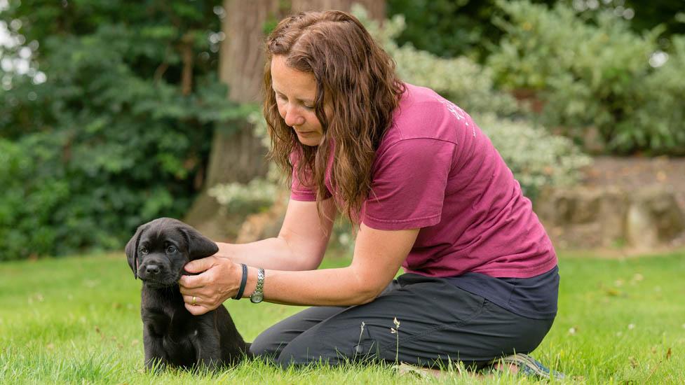 Becoming Dog Trainer Uk