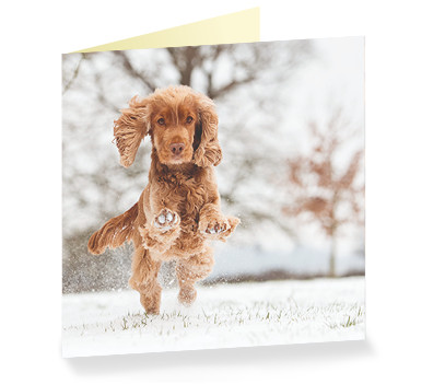 Hearing dog Rose Christmas Cards