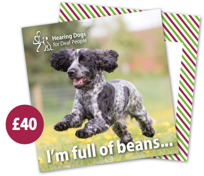 £40 Hearing Dogs Gift Card - Spaniel