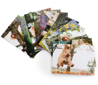 Spread of greeting cards featuring dogs and landscapes