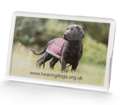 rectangular fridge magnet with a photo of a black labrador puppy wearing a bugundy hearing dogs jacket
