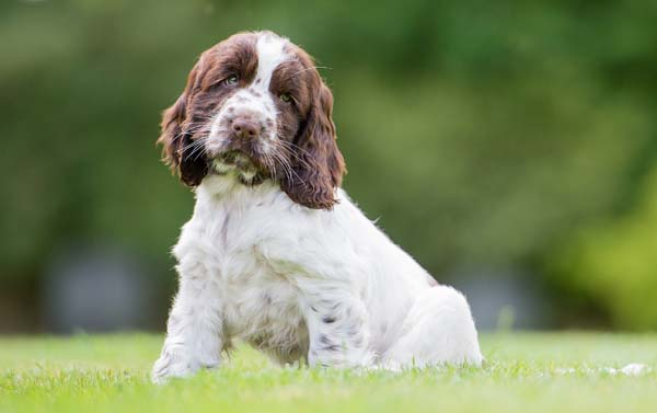 Adorable Hearing Dogs Sponsor Pup Cookie