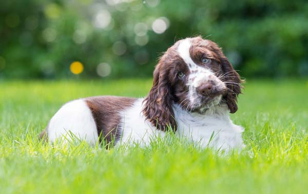 Cute Hearing Dogs Sponsor Pup Cookie