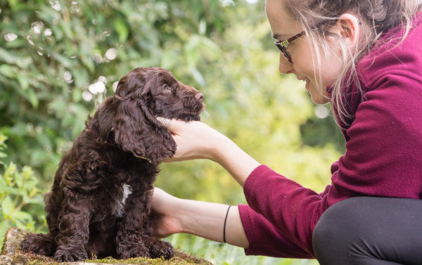 Adorable Hearing Dogs Sponsor Pup Harvey