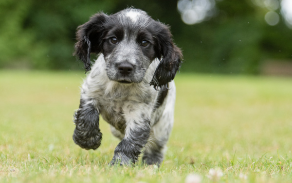 Cute Hearing Dogs Sponsor Pup Josie