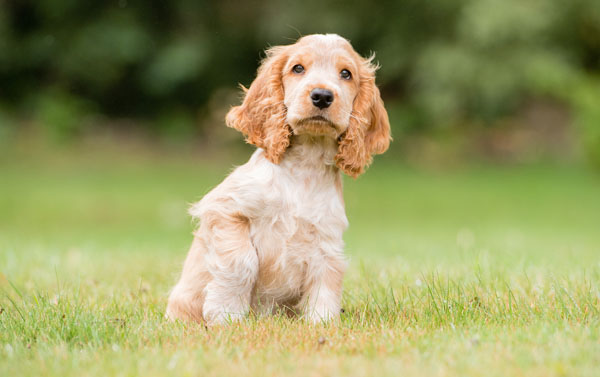 Adorable Hearing Dogs Sponsor Pup Leo